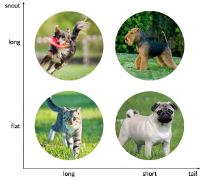 The categories used to classify cats and dogs: long and flat snouts as well as long and short tails.