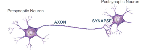Two connected neurons