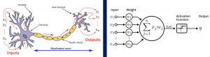 Neuron-Modell: organisch und künstlich