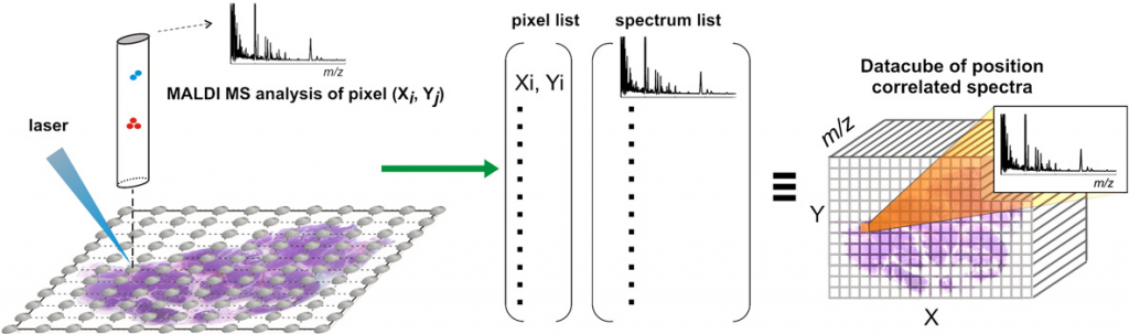 Depiction of the mass spectrometry imaging process