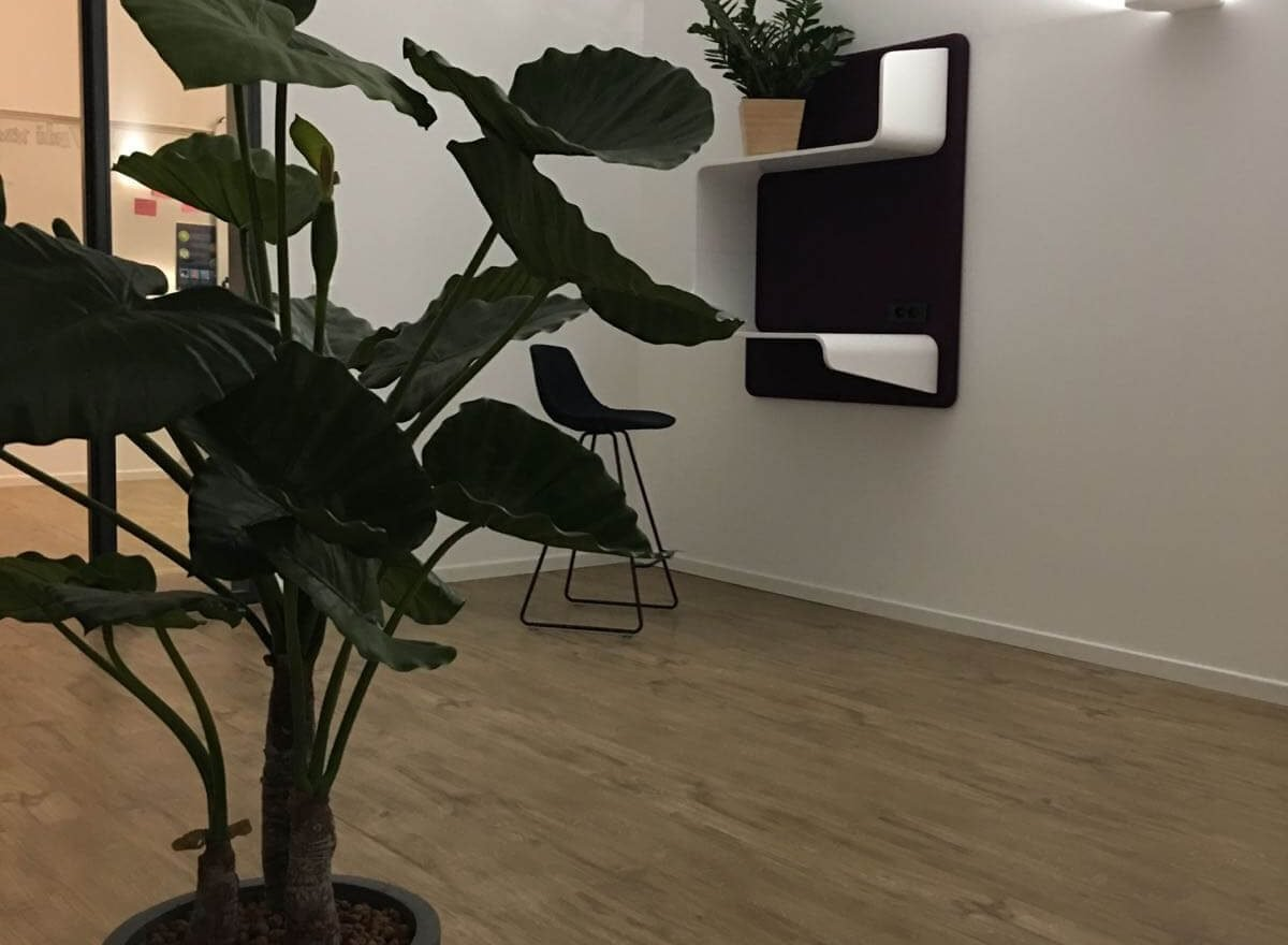 Pflanzen im Office Hamburg