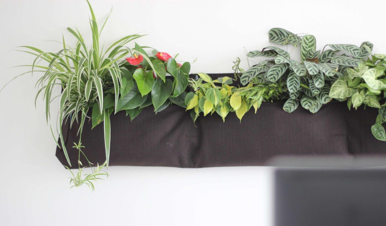 Wanddekoration aus Pflanzen im Office München