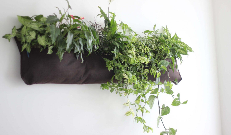 Dekorative Pflanzen an der Bürowand
